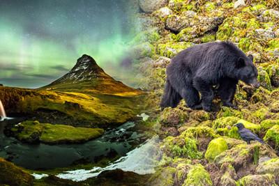Merge photograph of Iceland and British Columbia