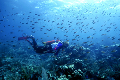 A diver in St Vincent & the Grenadines