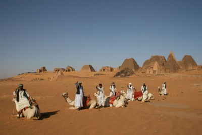 Camels in the North Sudan Desert