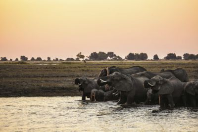 Elephants Okavango