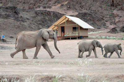 Elephants in Hoanib