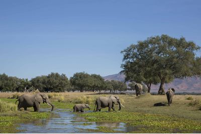A canoe safari with elephants in Mana Pools, Zimbabwe