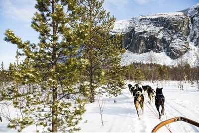 Dog Sledding in Northern Norway