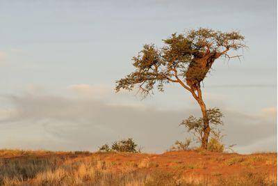 The Makgadikgadi Pans, Botswana