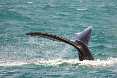 whale's tail on a marine safari