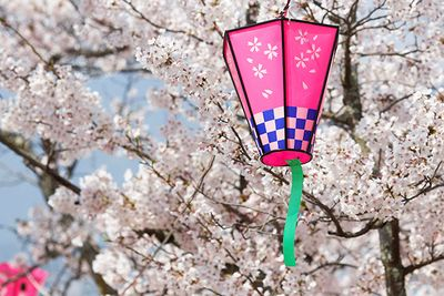 An image of a japanese lantern in the blossom