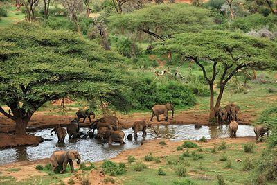 Elephants in Laikipia