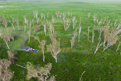 Bamurru Plains swamp