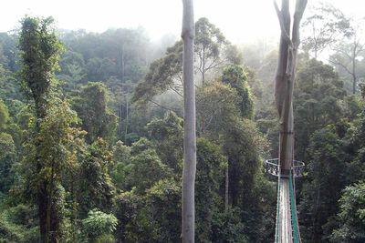 malaysia danum valley walkway