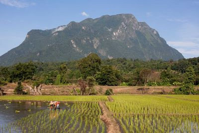 thailand chiang dao landscape