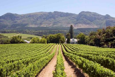 cape winelands