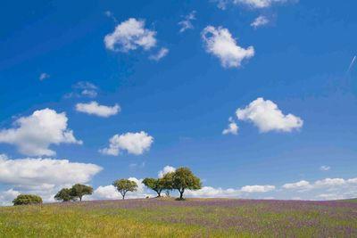 alentejo countryside