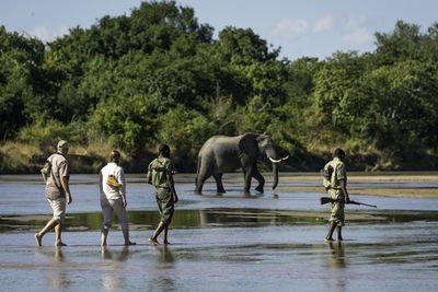 People Walking with Elephants