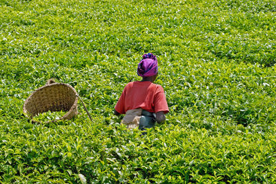 woman in tea plantation rwanda