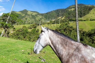 Horse in the Cocora Valley