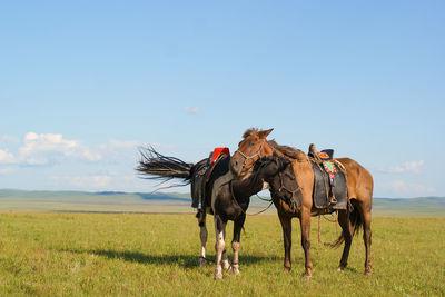 Horses in the Gobi Desert