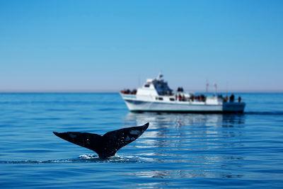whale watching la gomera tenerife