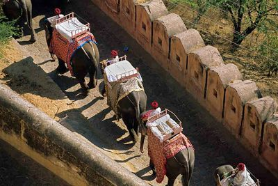 elephant riding procession