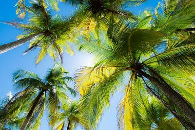 costa rica trees sustainability