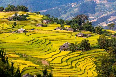 Ha Giang rice terraces