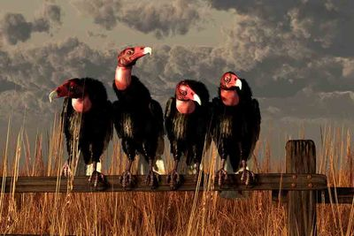 Committee of Vultures