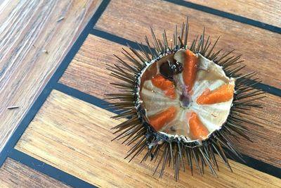 sea urchin blue deer boat