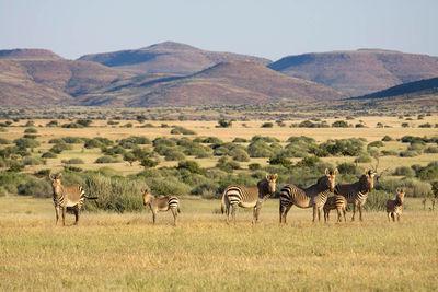 Damaraland Safari Namibia