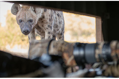 Botswana Photographic Hide