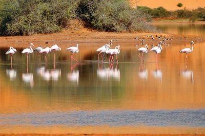 flamingo lake iriqui