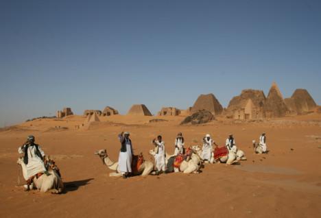 Khartoum Camels