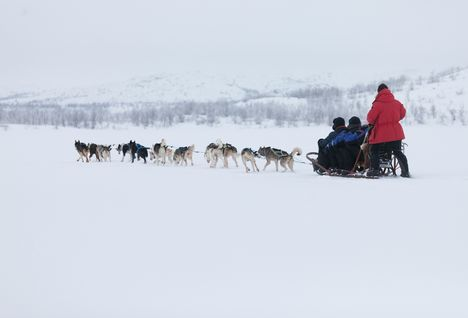 Dog Sledding, Swedish Lapland