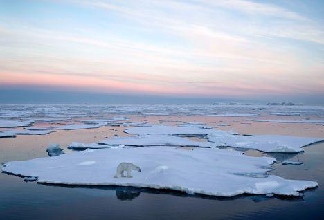 iceberg polar bear