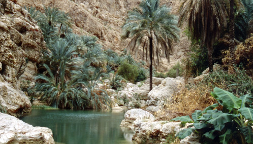 Palm Trees Amidst Rocky Outcrops at Wadi Shab