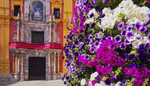 Flowers in Malaga, Spain