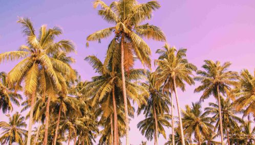 Palm Trees on the Beach, Anguilla