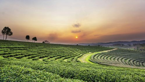 Sunset over tea plantations, Thailand