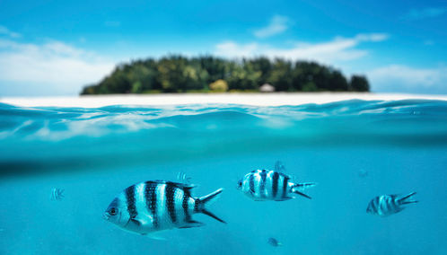 Tanzania snorkelling