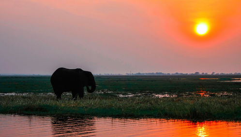 Zambia sunset and elephant