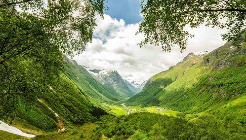 Fjord through trees