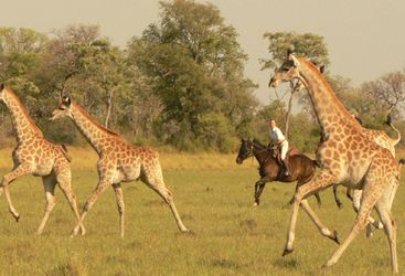 Spotting giraffes at Ride Makgadikgadi Pans, luxury camp in Botswana