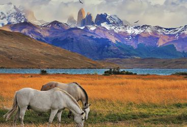 Horses Grazing Beneath the Andes