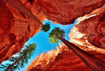 Worms-eye view of Bryce Canyon National Park