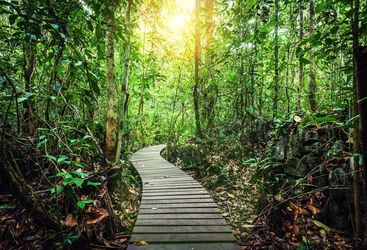 Rainforest path in Borneo