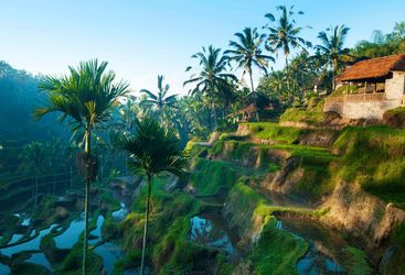 Rice terrace field in Bali