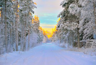 swedish lapland forest