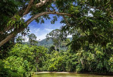 sumatra-rainforest