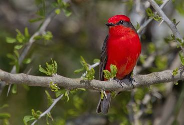 Bird, Sao Tome and Principe