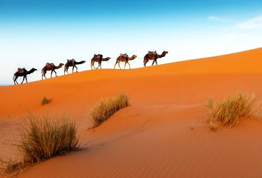 Morocco camels view