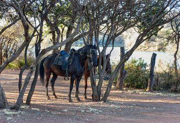 Horses in Botswana