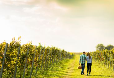 Walking couple in the vineyards
